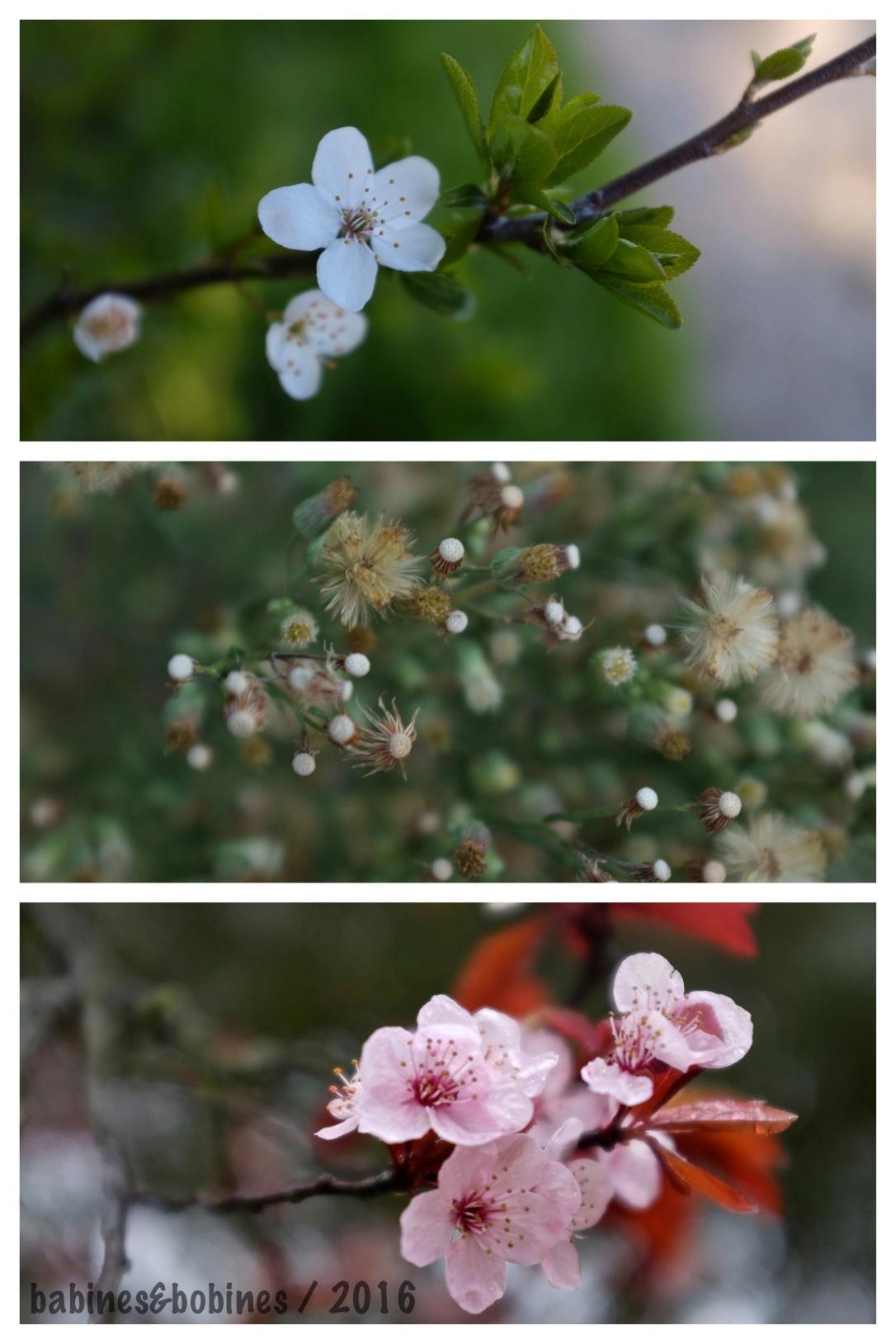 Fleurs 20166.jpg