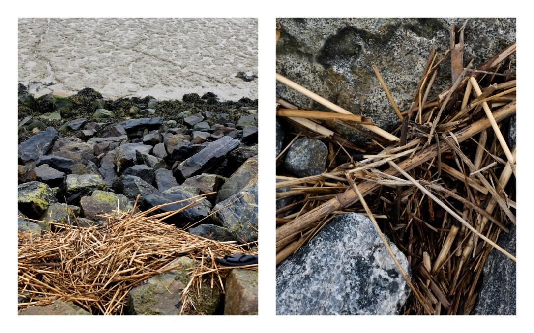 Les lisières de l'Estuaire1