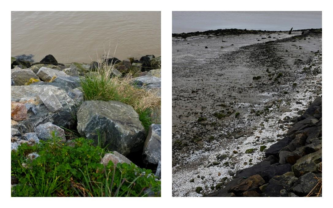 Les lisières de l'Estuaire5